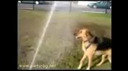 Глупавото Куче И Водата