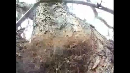 Гнездо но дългокраки паяци