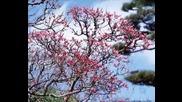 Японската Природа (Rin)