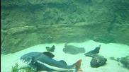 Oкеанариума в Кривоселци