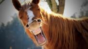 Смешни снимки на коне