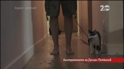 Котешка доминация - Контратемата на Даниел Петканов (09.10.2014г.)
