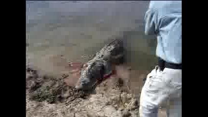 Lov na krokodil