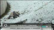 """Щастието на една панда през зимата - """"Здравей, България"""""""