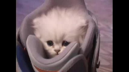 Много Сладко Котенце С Ужасяващ Рев