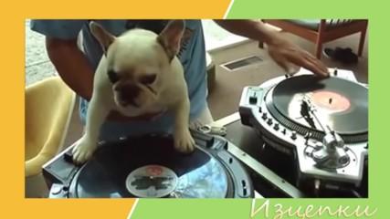 Най-смешните музикални изцепки
