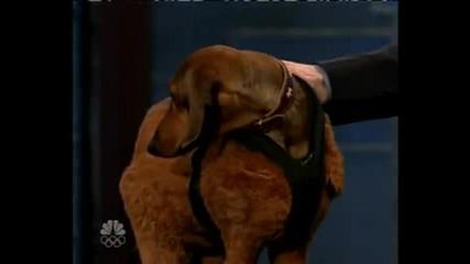 Най - високото куче в рекордите на гинес