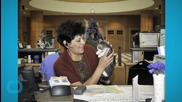 Kitten Library Opens in New Mexico County Office