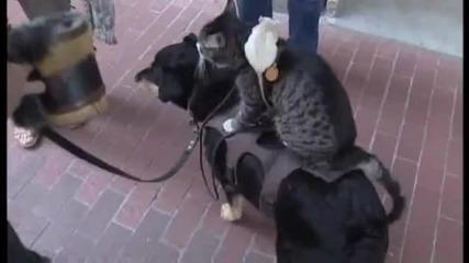 Вечна любов между куче,котка и мишка.