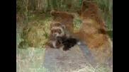 Животинки 3