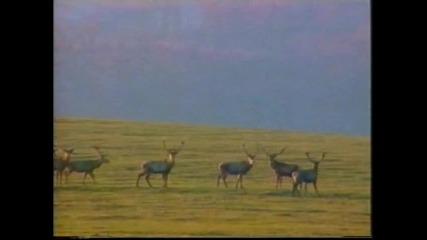 Лов на Вълци - Бг