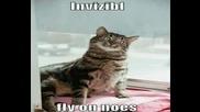 Многоооо Смешни Котки !!!