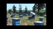 минути за_пчеларство разговор с Иван Бакърджийски Част-2