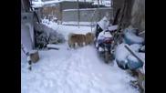 Klip4e V Snega.avi