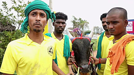 India: Huge crowds ignore coronavirus norms to attend bull-taming festival