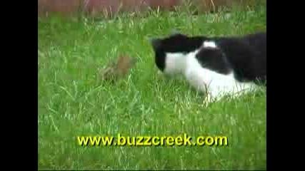 Катеричка Прави Котка За Смях