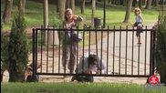 Мъж пада и си заклещва главата в оградата, става и си тръгва с нея - скрита камера