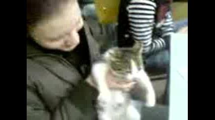 Лудо Малко Коте