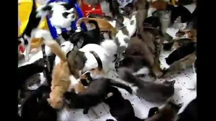 130 котки на едно място!