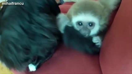 Забавни маймунки ... компилация 2014