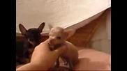 Много Сладки Кученца