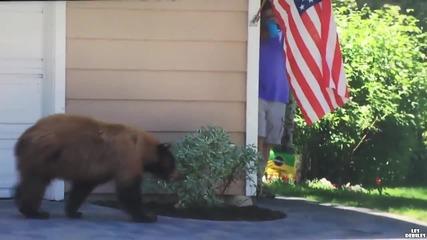 Най-страхливата мечка