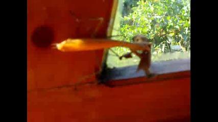богомолка и пеперуда 2 част