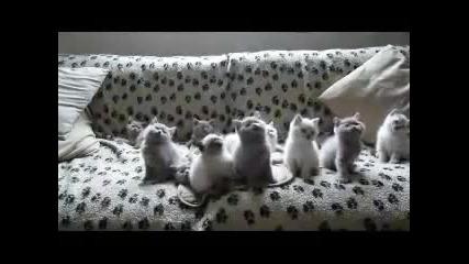Техно котки
