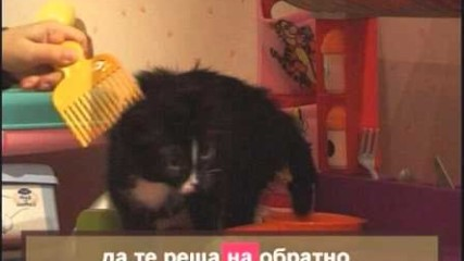 BON-BON - Maci Pisi - karaoke