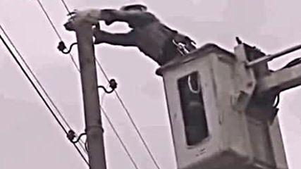 Cat on a pole