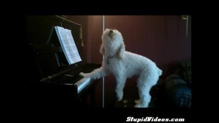 Сладко кученце свири и пее страхотно !