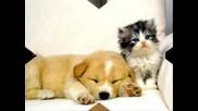 Сладки Котенца И Пиленца