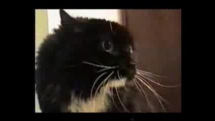 Говореща котка,  много смешно