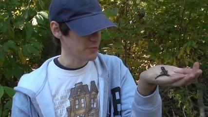 Саламандерче