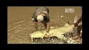 Чудовищна Риба с Размери на Човек