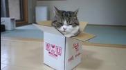 Шантавото коте Мару и Кутията - Сладур