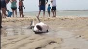 Хора спасяват голяма бяла акула, която заседна на пясъка