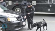 Boston Marathon Course Declared a 'no Drone Zone' by Police