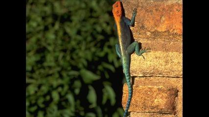 Невероятни 145 снимки на животни