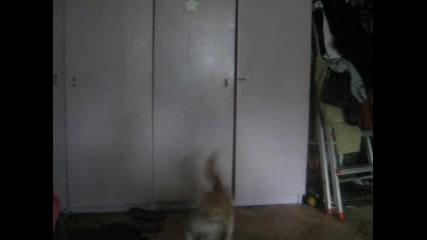 Котка И Лазер