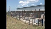 120 кучета от приюта в Сеславци чакат осиновители