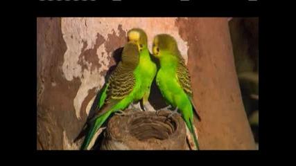 Документален филм за Папагалите