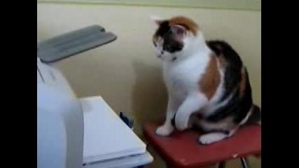 Коте Vs Принтер