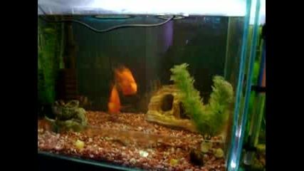 Akvariumni Ribki