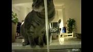 Вижте как тази котка си е измислила начин да пие вода :)