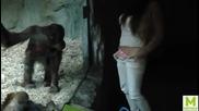 Момиче се опитва да възбуди маймуна в зоопарка
