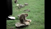Маймуна са опитва да пийне Fanta ! смях