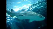Myrtle Beach Aquarium - Shark