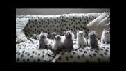Позитивни Котета - Много Смешно ;D