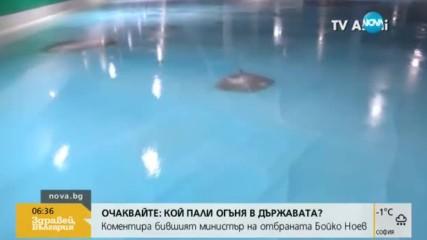 Да караш кънки върху лед със замразени риби